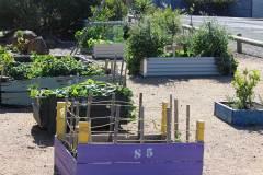 delacombe-community-garden-2