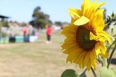 delacombe-community-garden-3