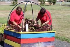 delacombe-community-garden-4
