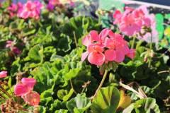 delacombe-community-garden-8